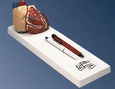 Heart Gift Pharmaceutical and Anatomical Model Gifts