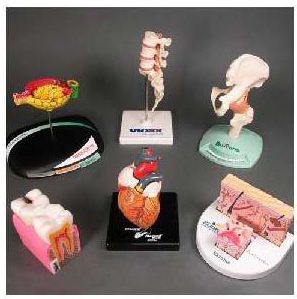 Pharma Promotional Model Pharmaceutical and Anatomical Model Gifts