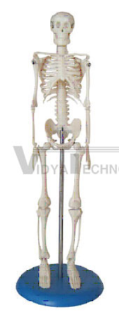 Mini Skeleton 42cm Tall Pharmaceutical and Anatomical Model Gifts
